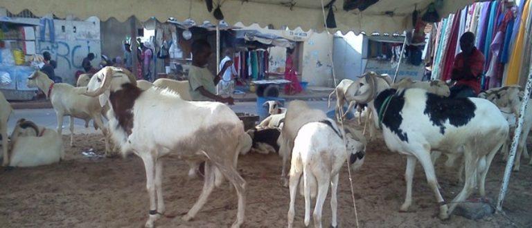 Article : Tabaski 2014 : Dakar sous un air de mouton